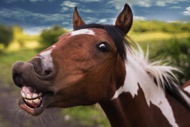 FDA Lists 'Horse Drug' As Approved COVID Treatment Ea89e5ec-1be7-494c-87c8-9fb9f6cb6ec2